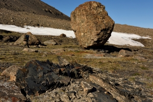 Large conglomerate erratic rock